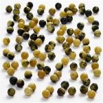 Ægte sten, 3 mm, gul harmoni, Gul turkis, 120 stk.