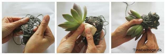 Brug hampgarn til at pakke rodnetten ind på en plante